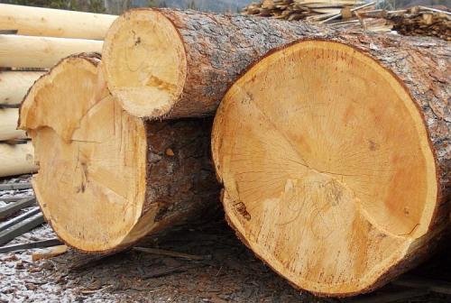 Выбор древесины для сруба бани