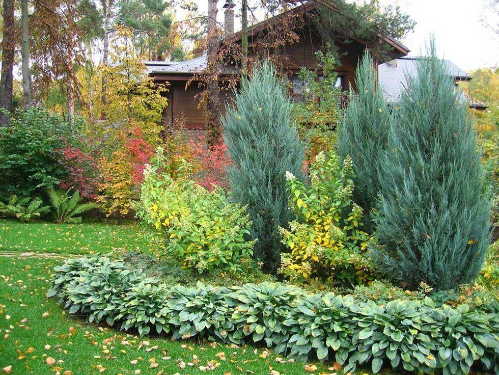 Соседство можжевельника с другими растениями