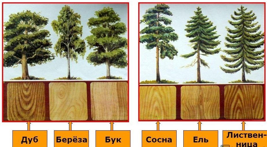Как выбрать породу дерева в зависимости от области применения?